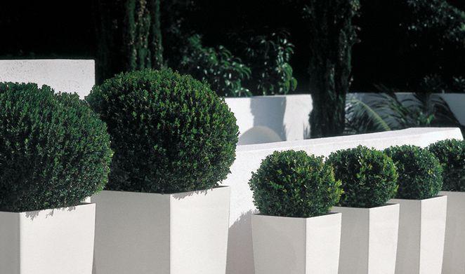 Migliorare l aspetto del proprio giardino come fare - Vasi da esterno alti ...